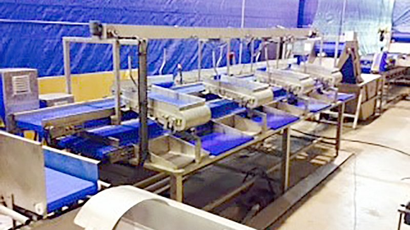 new fish processing line